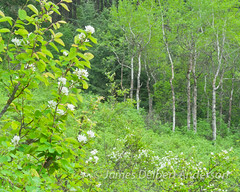 Kamiak forest spring (jamesdelbertanderson) Tags: palouse nature pnw washington whitmancounty forest kamiakbuttecountypark