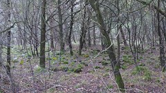 Woods of Havelte (Alta alatis patent) Tags: havelte woods moss