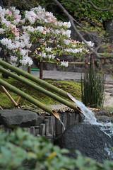 Kamakura | Hasedera (Toni Kaarttinen) Tags: japan  japonia    jap japonsko jaapan  japani japon xapn    japn jepang an tseapin giappone  japna japonija  japo  japonska japn hapon  japonya nht bn japanese kamakura formercapital hanami sakura cherryblossom cherryblossoms cherries temple shrine zen garden hasedera
