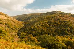 Autumn colour in the Teign Valley, Dartmoor