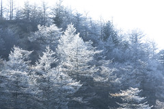 Early winter (20EURO) Tags: autumn winter beginning season ice freeze cold nature landscape white forest shadow bright twig mountain tsumagoi trek climbing canoneos5dmarkⅲ