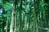 DSC02647 (Nai.) Tags: sonyrx100 taiwan taichung asia nature plants trees treeporn green greenness pine pinewoods