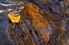 Left behind (windyhill623) Tags: leaf creek markcreek marysvillefalls texture water waterfalls yellow autumn seasonalchanges season outdoor reflection