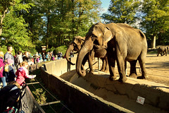 Hamburg,Tierpark Hagenbeck (Germany) (jens_helmecke) Tags: hamburg stadt hansestadt city tierpark zoo hagenbeck elefant tier animal jens helmecke nikon deutschland germany