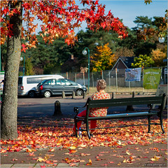 Autumnal harmony (John Riper) Tags: johnriper street photography straatfotografie square vierkant netherlands candid john riper canon maarn wereldhavendagen 50d 1755 autumn fall colours colors red bench lady fallen falling leaves woman bokeh bottle spa blauw water plus snackbar ijs nature herfst