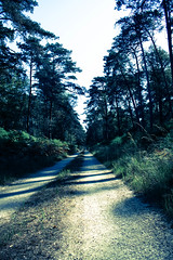 Closing in (gina.nicole.tesloff) Tags: forest wildlife woodland white walking woods shadow enchanting efflorescence exposure travel trees tree path road blue green outdoors overhead ominous outside old plant pretty artistic summer sky silhouette sunlight detail dark glow graceful grey grace grow jurassic light canon contrast colour colourful color countryside view vintage beautiful bright nature natural france