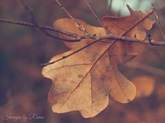 FOGLIA (ramonapartelli) Tags: foglie pianta albero foglia allaperto motivo organico autunno campagna