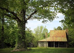 Little house, large oak trees, ca1800 (ariel is . . .) Tags: abandoned oldhouse ca1800 largestonechimney steeproof tinroof centralvirginia va empty underoldoaktrees federal adamesque veryearly19thcentury ithasalovelyboxcornice