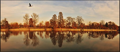 Sunset on Herastrau lake (Ioan BACIVAROV Photography) Tags: sunset herastrau lake bucharest romania water apa landscape peisaj reflections tree trees autumn toamna fisheye bacivarov ioanbacivarov bacivarovphotostream interesting beautiful wonderful wonderfulphoto nikon bird panorama