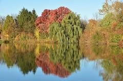 Autumn reflections - EXPLORE 11-5-16 (stevelamb007) Tags: chicagobotanicgarden serene peaceful fall autumn reflections pond trees color stevelamb nikon d7200
