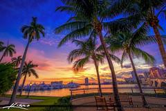 West Palm Beach Sunset Under Coconut Tree Waterway (Captain Kimo) Tags: aurorahdr2017 captainkimo florida hdrphotography marina palmbeachcounty palmtree photomatixpro sunset waterway westpalmbeach palmbeach