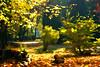 Autumn Leaves - Susan Boyle (Janusz Kudlak) Tags: autumn art painting trees polanica sonyalphadslr myniu pastuch best awardtree ilovemywife agnieszka