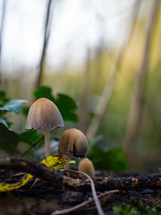 Chateau Marquette (Paul Beentjes) Tags: nederland netherlands heemskerk estate landgoed marquette herfst fall autumn leaves bladeren mushrooms paddestoelen