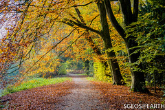 Autumn at Amsterdamse bos (SGEOS@EARTH) Tags: amsterdamsebos forrest autumn herfst bladeren color kleuren outdoor nature canon sgeosearth 5dmarkiv