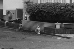 Today's Cat@2016-11-21 (masatsu) Tags: cat thebiggestgroupwithonlycats catspotting pentax mx1 bw