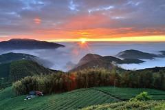 ~~ Tea farm Sunset (Shang-fu Dai) Tags:  taiwan  clouds  nikon d800e sky    landscape formosa sunset  af20mmf28d   seaofclouds