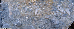 20150703_08 Various invertebrate fossils in limestone | Hgklint, Gotland, Sweden (ratexla) Tags: ratexlasgotlandtrip2015 gotland 3jul2015 2015 canonpowershotsx50hs hgklint sweden sverige scandinavia scandinavian europe beautiful earth tellus photophotospicturepicturesimageimagesfotofotonbildbilder europaeuropean summer travel travelling traveling norden nordiccountries roadtrip journey vacation holiday semester resaresor landscape nature fossil fossils pentaptych dead corpse death dd dda djur animals animal biology zoology fossiler limestone beach rock rocks stone kalksten dden ontheroad sommar macro makro favorite