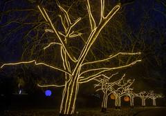 Allee der Kirschen (dietmar-schwanitz) Tags: berlin germany deutschland botanischergarten botanicalgarden christmasgarden alleederkirschen nachtaufnahme nightshot langzeitbelichtung longexposure nacht night dunkelheit darkness licht light bäume trees kirschen cherrytrees cherrys weihnachtszeit christmastime christmas weihnachten nikond750 nikonafsnikkor24120mmf40ged lightroom dietmarschwanitz