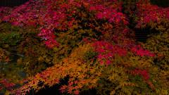 AUTUMN SKETCHBOOK (shmc5hamer) Tags: autumn kyoto colour