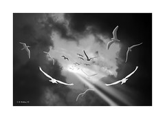 The Light (starg82343) Tags: light shadow sky blackandwhite bw birds clouds photoshop effects flying gulls flight monotone ps opening lighttrails grayscale fx 2d darkclouds paintbrushes sfx brianwallace