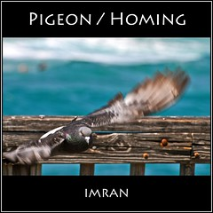Pigeon, Homing - IMRAN™ -- 1500+ Views! 60+ Comments (ImranAnwar) Tags: ocean wood blue winter sunset sea inspiration bird nature water square outdoors landscapes flying nikon surf seasons florida turquoise framed peaceful tranquility atlanticocean imran 2012 lifestyles pompanobeach d300 imrananwar flickraward
