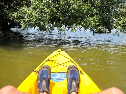 lake tree water flora kayak watershoe
