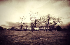 The watchers (Flick Vlooi ~ (inactive for most, layout too slow)) Tags: trees winter light sky art texture field grass dark landscape moody shadows pentax ethereal haunting toned watchers k5 treesdiestandingup smcpentaxda15mmf4edallimited sailsevenseas coppercloudsilvernsun