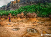 2009-11-10 [1020] Hoodoo field, Yeliou (Badger 23 / jezevec) Tags: 2009 badger23 jezevec taiwan ταϊβάν formosa 中華民國 tchajwan republikken kina republikchina 台灣 湾 타이완 섬 тайвань đài loan tajwan thòivàn تايوان טייוואן 福爾摩沙 republicofchina roc taivāna taívan 臺灣 தாய்வான் تەيۋەن rock rotsen 岩石 roches felsen βράχοι roccie 바위 rochas утесы rocas geology stone hoodoo 地质 地質 geología geologie géologie геология جيولوجيا גאולוגיה 지질학 地質学 ভূবিদ্যা geologi भूविज्ञान jarðfræði geolaíocht địachất geological