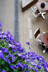 City Blooms (N Ackers) Tags: street city uk flowers london outside dof purple chairs bokeh citylife violet ground fromabove tables blooms lookingdown