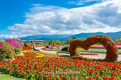 Harry_09968,,,,,,,,,,,,, (HarryTaiwan) Tags: taiwan    d800               harryhuang   hgf78354ms35hinetnet