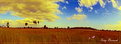 Field, sky and its contrasts (Tony Borrach) Tags: sky field brasil riodejaneiro sony céu contraste infrared campo contrasts dsc wx photoscape itaguaí tonyborrach mygearandme dscwx100 wx100 sonydscwx100 vigilantphotographersunite