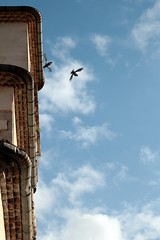 Flying in a blue dream... (modestino68) Tags: sky church birds clouds nuvole chiesa uccelli cielo joesatriani