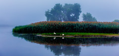 Swan Island  (Explore 7/9/2013) (Mi Bob) Tags: haven fog grand grandriver