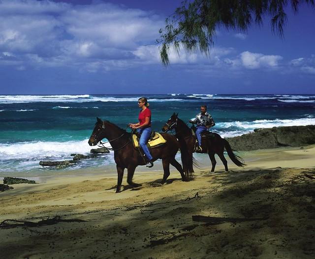海辺乗馬&ノースショア(海外の動物に出会えるオプショナルツアー)