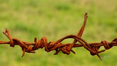 Twist (James Milstid) Tags: fence wire rust post rusty barbedwire