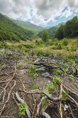 Roots of my origin Country (BesnikMatoshi) Tags: blue trees sky photoshop roots foliage macedonia kosova mali albanian albania hdr shar sharri skopje 32bit besnik shqiptare ilir prevalla sharr prevallac planina shkupi illyrian iliret qeni alpet bitia matoshi