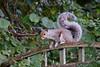 Squirrel with swishy tail (Phoenix Leo) Tags: squirrel tail swishy swishing