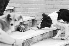 posso adottarlo? (andaradagio) Tags: bw dogs canon bianconero cani flickraward miglioramicodelluomo inostriamicianimali andaradagio nadiadagaro