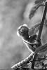 """Niteroi (bpwilby) Tags: brazil blackandwhite bw film southamerica rio brasil 35mm de blackwhite nikon rj delta nikonf100 ilford ilforddelta400 niteroi americadosul ilforddelta 400speed janeiro"""" """"estado"""