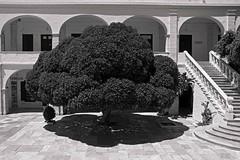 (giovdim) Tags: light blackandwhite white tree church architecture shadows time space arches greece tinos expanding volume stairways summerlight panagia thnos xora giovdim