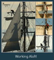 Working Aloft! (Megspics .) Tags: water festival sailing sails mast tallships rigging portphillipbay victoriaaustralia