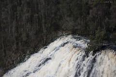 to dip falls (lookseebynaomifenton) Tags: trees nature forest waterfall australia tasmania