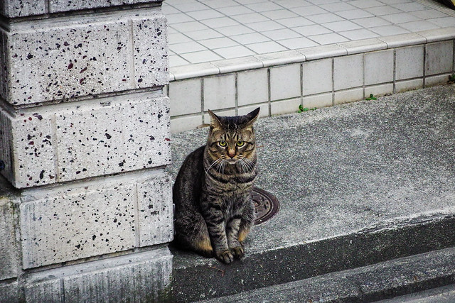 Today's Cat@2013-10-15