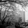 13025samejima_miki06 (Tokyo Sightseeing Photo Club) Tags: tokyotower zojoji 140330