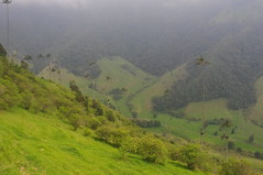 Cocora Valley, Colombia (ARNAUD_Z_VOYAGE) Tags: park cloud mountain color colour green colors beautiful architecture clouds america landscape site los amazing colombia colours view natural south centro central palm national american valley armenia andes huge wax region department active cordillera centrale nevados cocora quindo