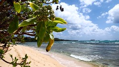 Bikini Beach or Clissolds Beach, Laie Point (aharmer1) Tags: beach point bikini laie laiepoint bikinibeach clissolds clissoldsbeach