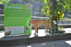 WKK_6462 (kongkham35@hotmail.com) Tags: songkhlazoo nikond7000 nikon1685 songkhla thailand