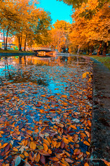 Autumn 014 (Milen Mladenov) Tags: 2016 bulgaria d3200 landscape montana montanesium nikon autumn colors grass leaves orange outdoor park path reflection trees view water waterautumn yellow