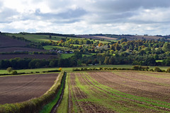 Allexton Autumn (AndyorDij) Tags: autumn hedgerow fields trees tree allexton leicestershire rutland england uk unitedkingdom 2016 publicfootpath