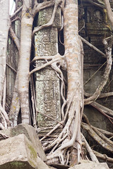 Reclaimed ([Alexandre]) Tags: culture trees adventure siemreap stones history carvings backacking cambodia bengmealea temple roots siemreapprovince kh